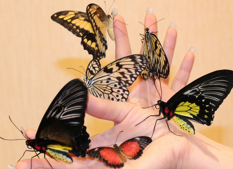 Бабочки как подарок 26