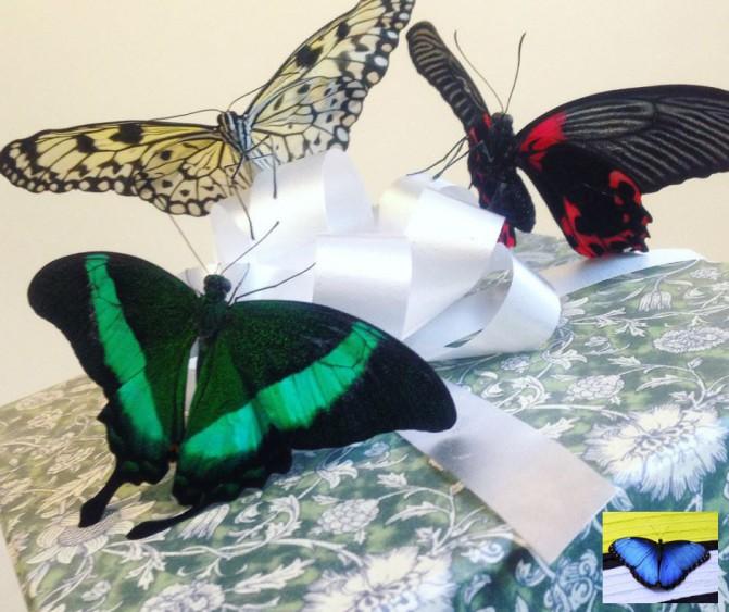 Бабочки как подарок 3